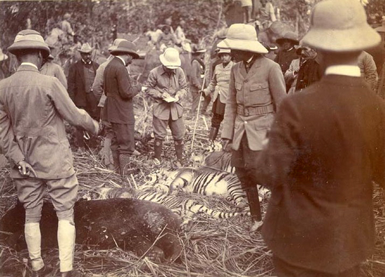 Cawnpore Tent Club Hats being worn on a tiger hunt. Note the varying sizes and the piped puggaree far left.